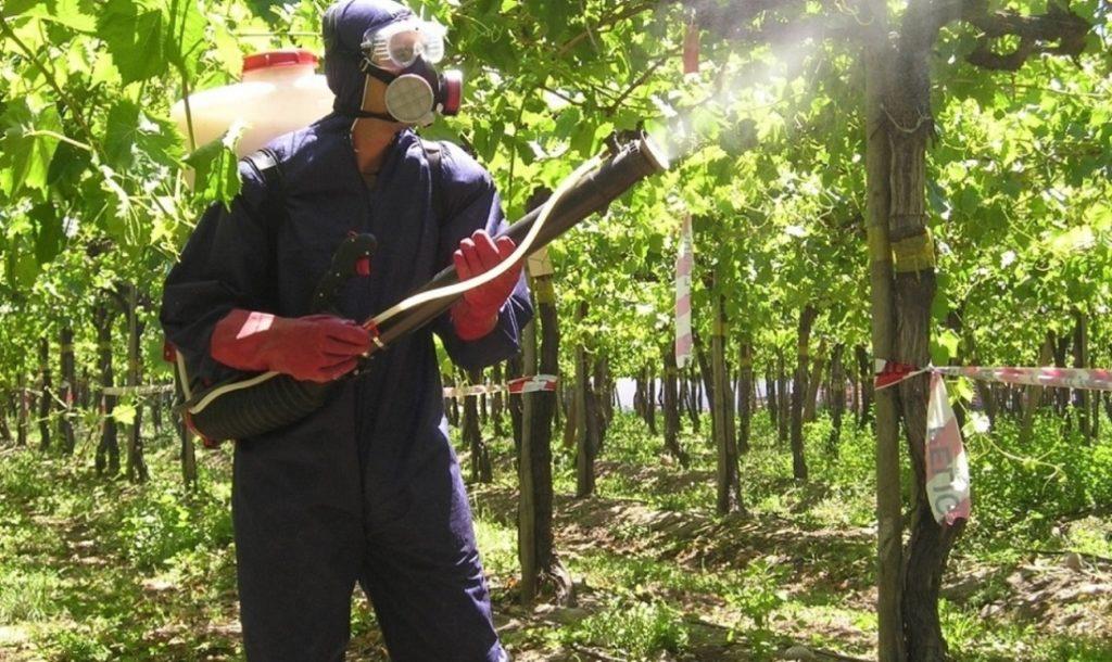 Защита_деревьев_гл